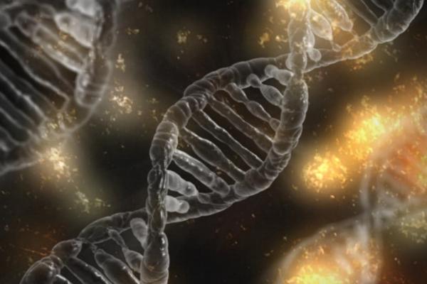 """Šūnas mūsu organismā: kā tās mainās un """"izvēlas savu likteni"""""""