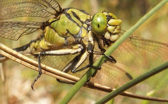 Pasaulē strauji iznīkst kukaiņi: Vai kukaiņu apokalipse tuvojas arī Latvijai?